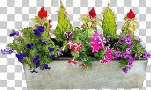 Flowerpot Flower Box Flower Garden PNG