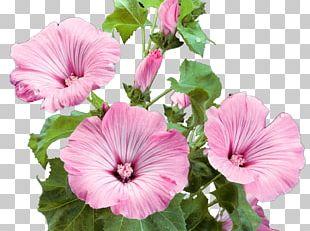 Flower Garden Pink Flowers PNG