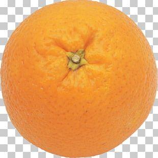 Mandarin Orange Clementine Tangelo Grapefruit Tangerine PNG