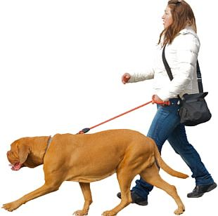 Dog Walking Puppy Dog Collar Dog Training PNG
