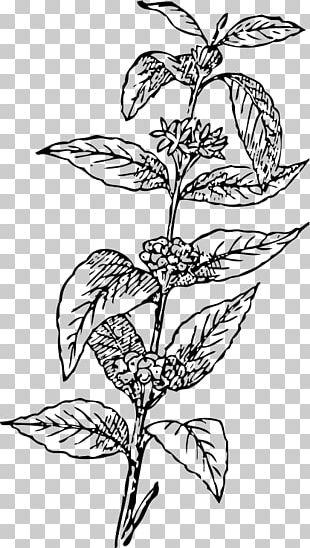 Arabica Coffee Tea Coffee Bean Coffee Cup PNG