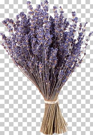 Lavender Purple Flower Google S PNG