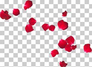 Petal Flower Frans Verwerft En Zonen Rose PNG