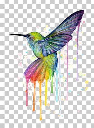 Hummingbird Printmaking Art Painting Canvas Print PNG