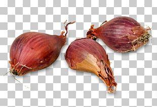Shallot Asian Cuisine Vegetable Potato Onion PNG