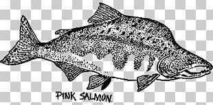 Fish Pink Salmon Chum Salmon Drawing PNG