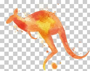Watercolor Painting Macropodidae Kangaroo PNG