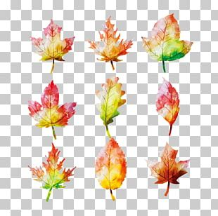 Maple Leaf Watercolor Painting Autumn PNG