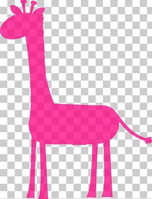 Baby Giraffes West African Giraffe Infant Northern Giraffe PNG