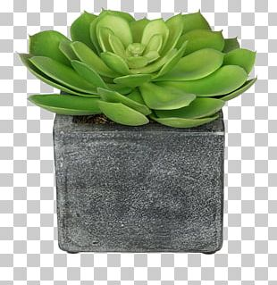 Artificial Flower Echeveria Areca Palm Plant PNG