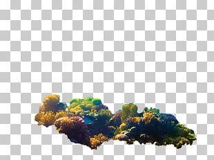 Coral Reef Symbiodinium Aiptasia Zooxanthellae PNG