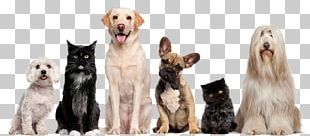 Cat Dog Grooming Pet Sitting PNG