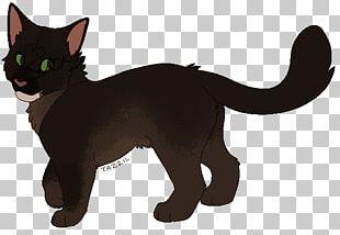 Korat Havana Brown Black Cat Whiskers Kitten PNG