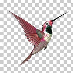 Hummingbird Beak Blog Feather PNG