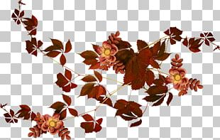 Autumn Leaves Frames PNG