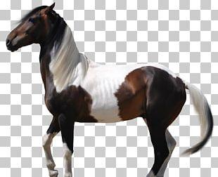 Arabian Horse Mustang American Paint Horse Thoroughbred Akhal-Teke PNG