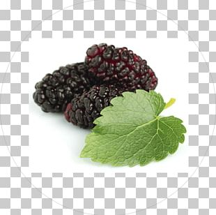 Tea Black Mulberry White Mulberry Extract Herb PNG