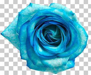 Blue Rose Blue Flower PNG
