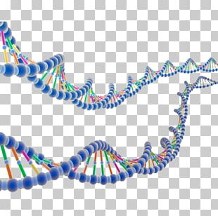 ENCODE DNA Molecular Biology Nucleic Acid Double Helix Research PNG