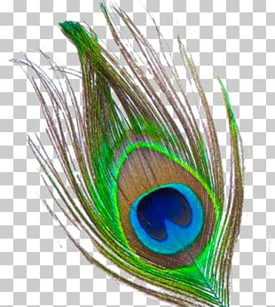 Krishna Feather PNG