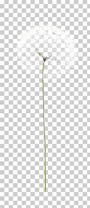 Taraxacum Platycarpum Common Dandelion Euclidean PNG