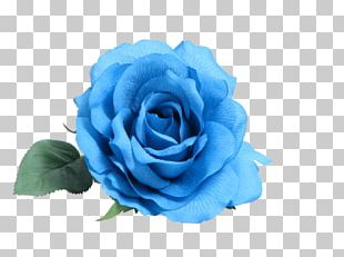 Blue Rose Flower Rosa Peace PNG
