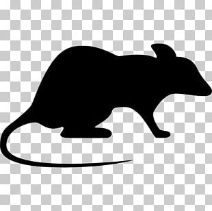 Brown Rat Laboratory Rat Mouse Rodent PNG