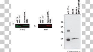 Ionomycin IL17A Monoclonal Antibody Western Blot PNG