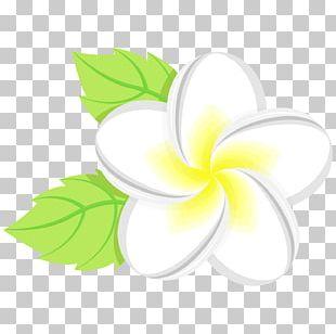 Flower Floral Design Leaf Petal PNG