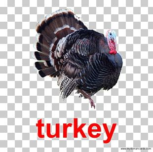 Black Turkey Turkey Meat Poultry Red Junglefowl PNG