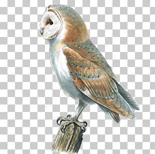 Barn Owl Swallow Bird Pellet PNG