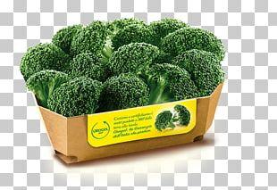 Broccoli Minestrone Affogato Frozen Food PNG