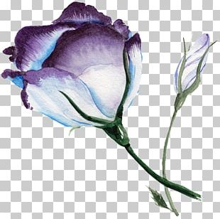 Watercolour Flowers Watercolor Painting Blue Rose Art PNG