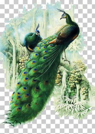 Painting Work Of Art Peafowl PNG