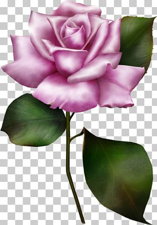 Wedding Invitation Flower Rose PNG