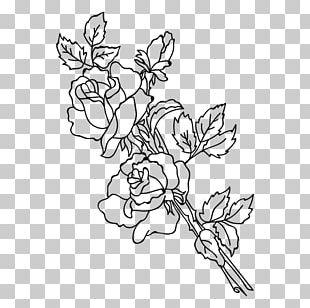 Plant Stem Floral Design Rose Drawing Flower PNG