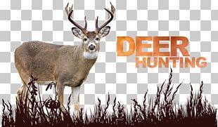 White-tailed Deer Reindeer Antler Deer Hunting PNG