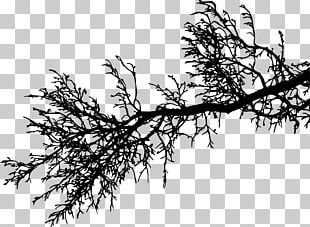 Branch Tree Silhouette Twig PNG