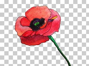Common Poppy Flower Watercolor Painting Remembrance Poppy PNG