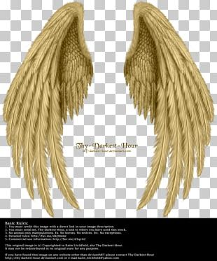 Drawing Bird Butterfly Angel Wing PNG
