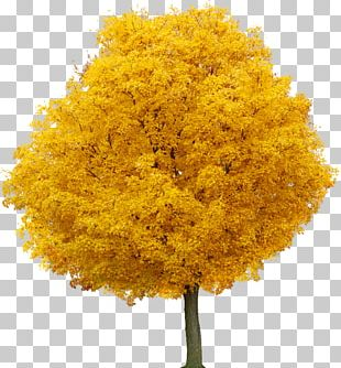 Food Coloring Yellow Maple PNG