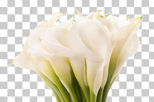 Beautiful In God's Eyes Arum-lily Flower Lilium Desktop PNG