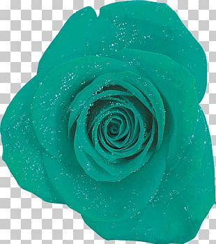 Garden Roses Blue Rose Turquoise PNG
