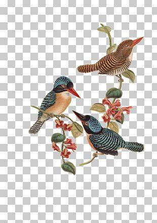 Bird Flower T-shirt PNG