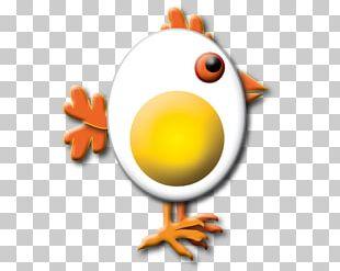 Chicken Bird Galliformes Beak PNG
