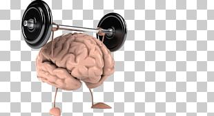 Cognitive Training Human Brain CrossFit Wonderland Human Body PNG