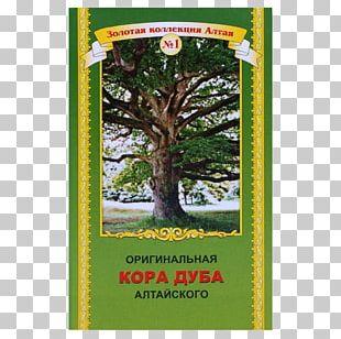 ShoppingOase24 Common Sage Garden Tree Tea PNG