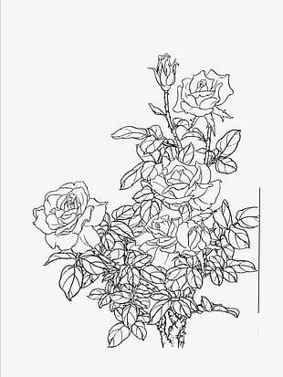 Flowers Line Drawing Artwork PNG