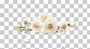 Beach Rose White Flower PNG