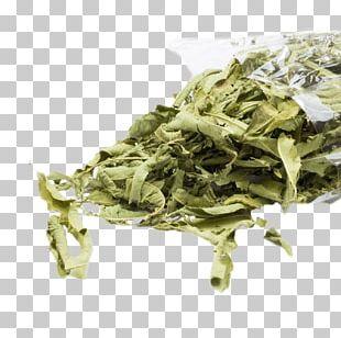 Sencha Leaf Vegetable PNG